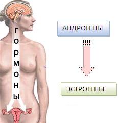 chto-virabativaetsya-v-organizme-vo-vremya-seksa